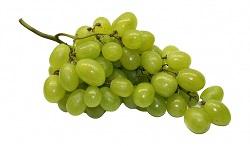Bild Weintrauben
